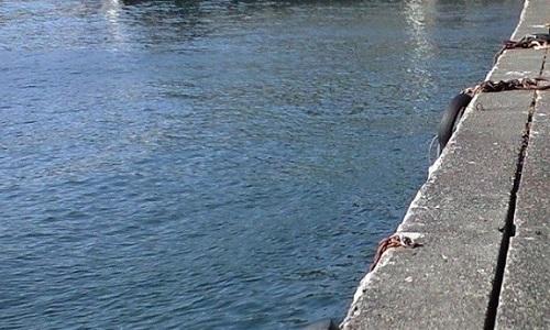 「 チヌ ( 黒鯛 ) 釣り入門 」 0515