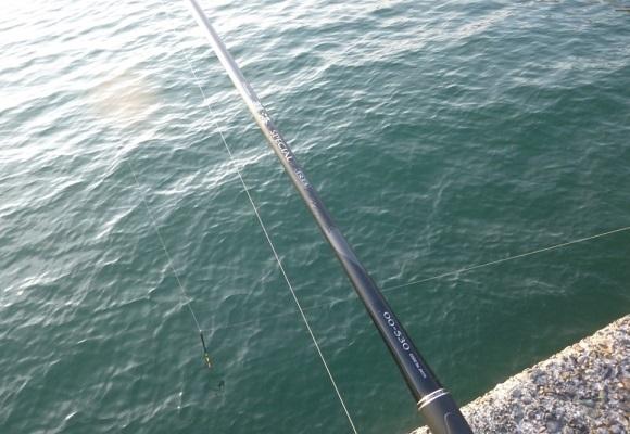 「 チヌ ( 黒鯛 ) 釣り入門 」 0525