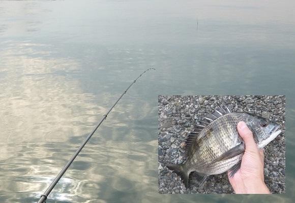 「 チヌ ( 黒鯛 ) 釣り入門 」 0541