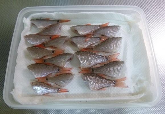 「 チヌ ( 黒鯛 ) 釣り入門 」 0555