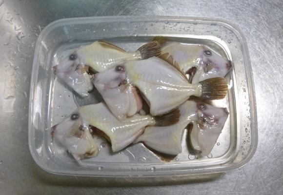 「 チヌ ( 黒鯛 ) 釣り入門 」 0596