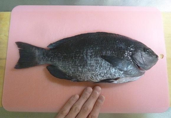 「 チヌ ( 黒鯛 ) 釣り入門 」 0683