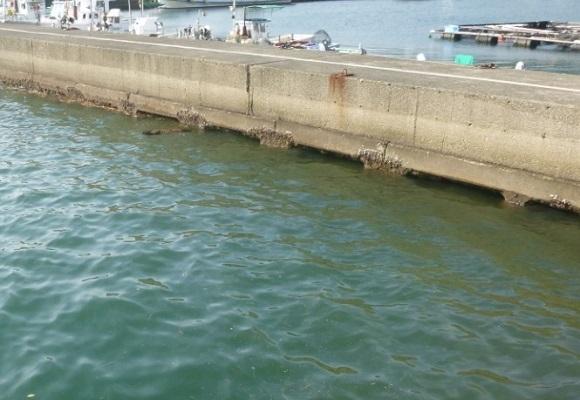 「 チヌ ( 黒鯛 ) 釣り入門 」 0711