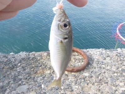 「 チヌ ( 黒鯛 ) 釣り入門 」 0713