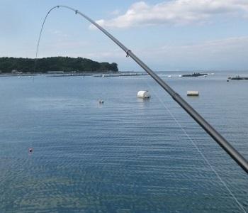 「 チヌ ( 黒鯛 ) 釣り入門 」 0723