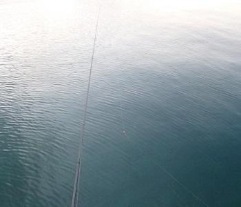 「 チヌ ( 黒鯛 ) 釣り入門 」 0728