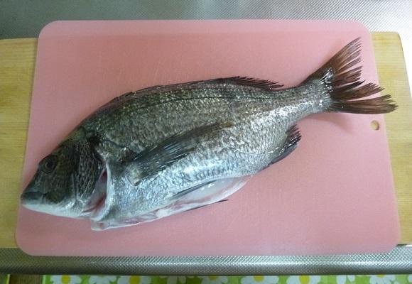 「 チヌ ( 黒鯛 ) 釣り入門 」 0736