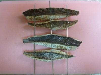 「 チヌ ( 黒鯛 ) 釣り入門 」 0743