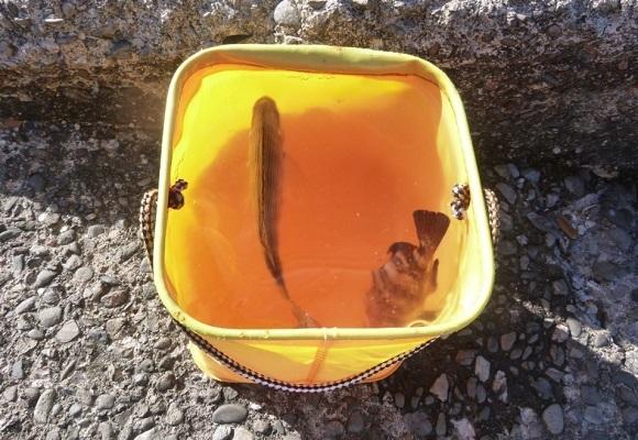 「 チヌ ( 黒鯛 ) 釣り入門 」 0773