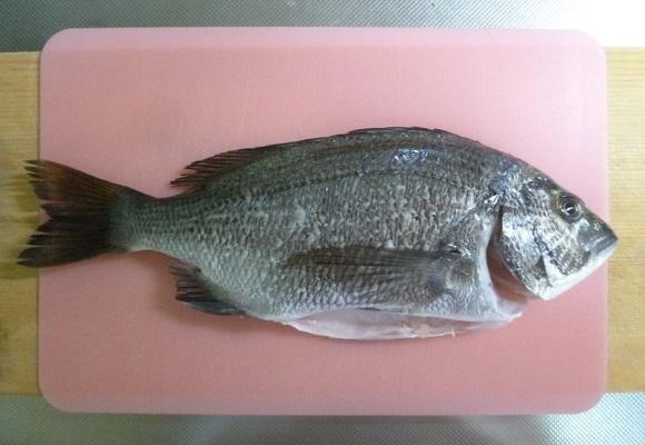 「 チヌ ( 黒鯛 ) 釣り入門 」 0780