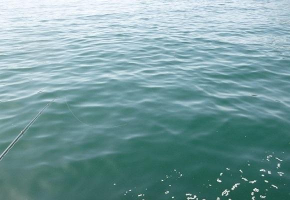 「 チヌ ( 黒鯛 ) 釣り入門 」 0805