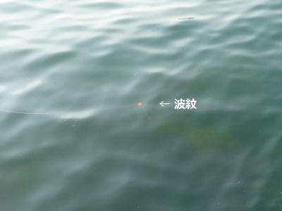 「 チヌ ( 黒鯛 ) 釣り入門 」 0842