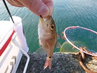 「 チヌ ( 黒鯛 ) 釣り入門 」 0845