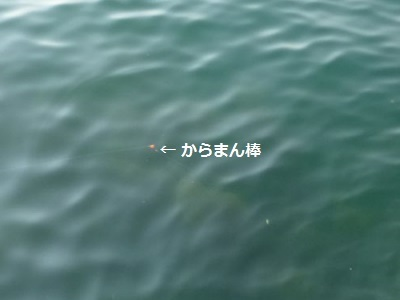 「 チヌ ( 黒鯛 ) 釣り入門 」 0846