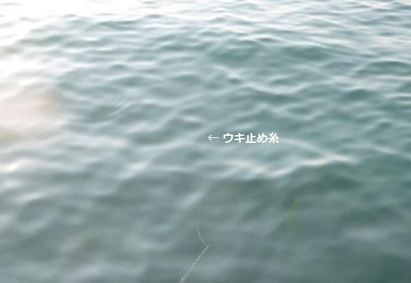 「 チヌ ( 黒鯛 ) 釣り入門 」 0853