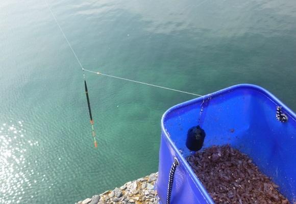 「 チヌ ( 黒鯛 ) 釣り入門 」 0857