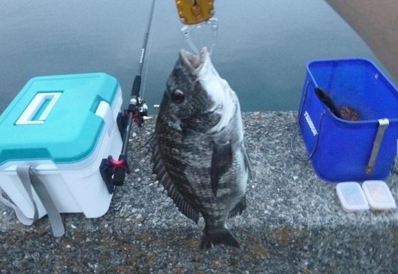「 チヌ ( 黒鯛 ) 釣り入門 」 0873