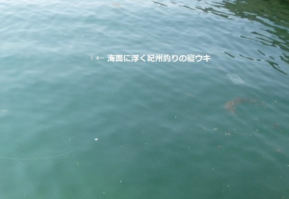 「 チヌ ( 黒鯛 ) 釣り入門 」 0896