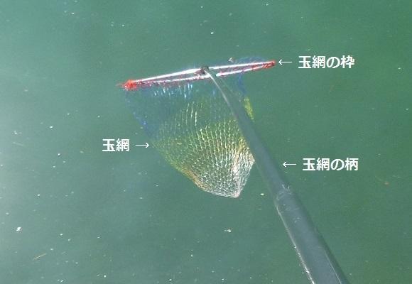 「 チヌ ( 黒鯛 ) 釣り入門 」 0906