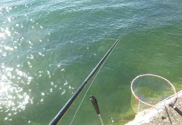 「 チヌ ( 黒鯛 ) 釣り入門 」 0928