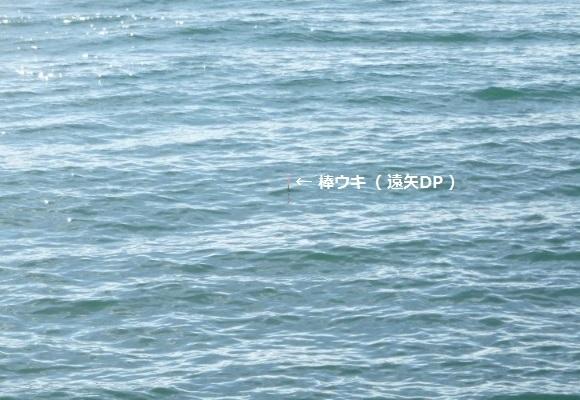 「 チヌ ( 黒鯛 ) 釣り入門 」 0935
