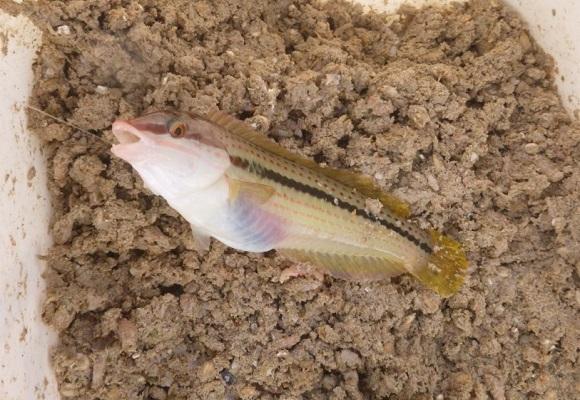 「 チヌ ( 黒鯛 ) 釣り入門 」 0938