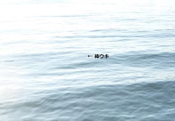 「 チヌ ( 黒鯛 ) 釣り入門 」 0949