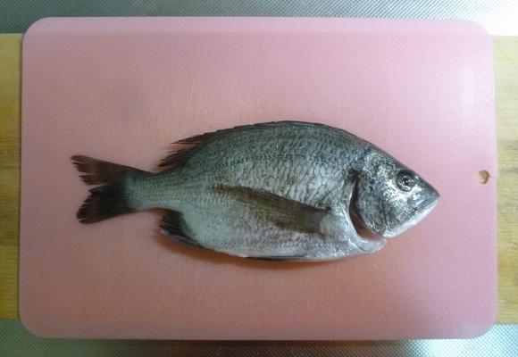 「 チヌ ( 黒鯛 ) 釣り入門 」 0967