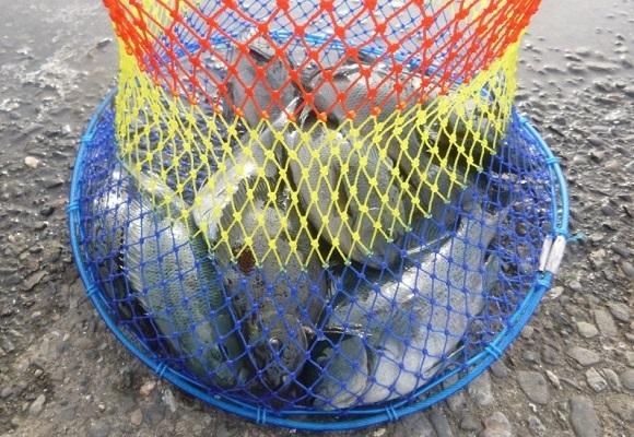 「 チヌ ( 黒鯛 ) 釣り入門 」 1043