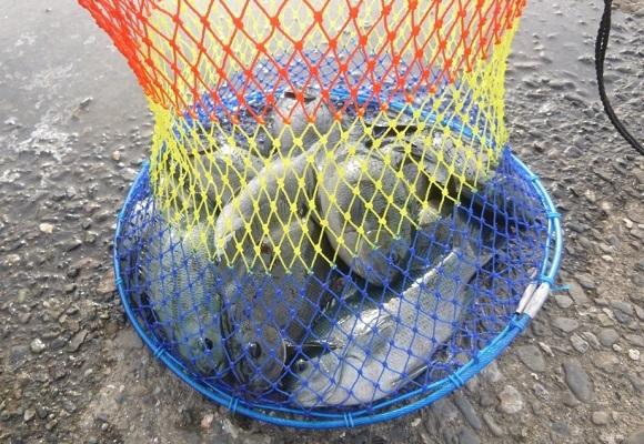 「 チヌ ( 黒鯛 ) 釣り入門 」 1055