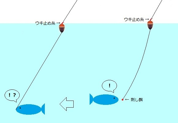「 チヌ ( 黒鯛 ) 釣り入門 」 1123