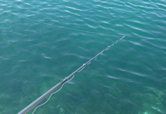 「 チヌ ( 黒鯛 ) 釣り入門 」 1144