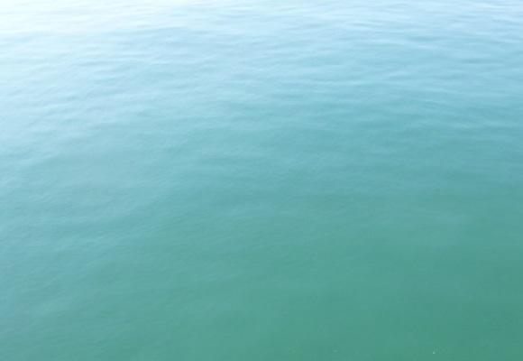 「 チヌ ( 黒鯛 ) 釣り入門 」 1146