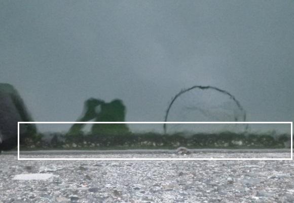「 チヌ ( 黒鯛 ) 釣り入門 」 1260
