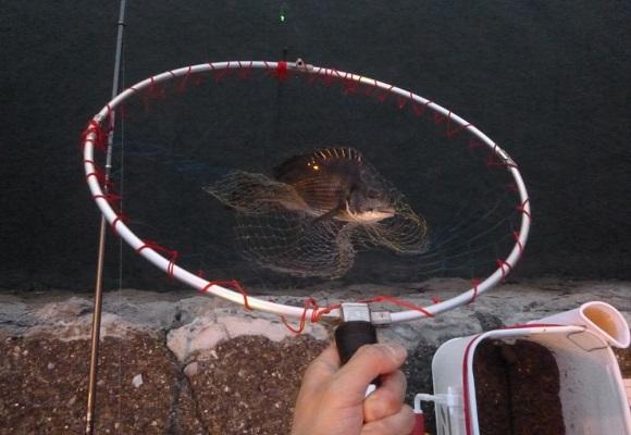「 チヌ ( 黒鯛 ) 釣り入門 」 1291