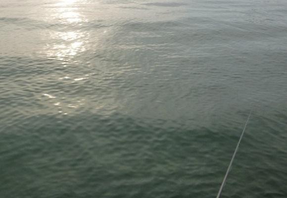 「 チヌ ( 黒鯛 ) 釣り入門 」 1300