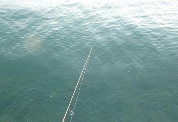 「 チヌ ( 黒鯛 ) 釣り入門 」 1377