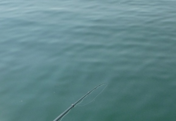 「 チヌ ( 黒鯛 ) 釣り入門 」 1401