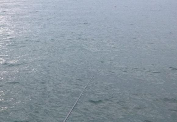 「 チヌ ( 黒鯛 ) 釣り入門 」 1420