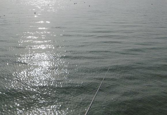 「 チヌ ( 黒鯛 ) 釣り入門 」 1719