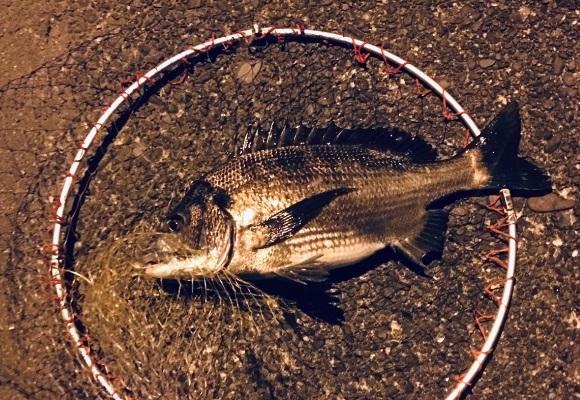 「 チヌ ( 黒鯛 ) 釣り入門 」 1728