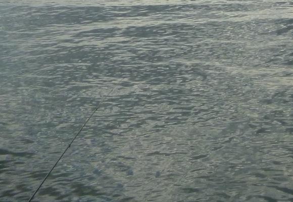 「 チヌ ( 黒鯛 ) 釣り入門 」 1954