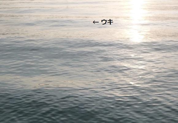 「 チヌ( 黒鯛 )釣り入門 」 1476