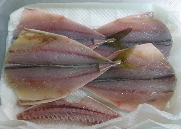「 チヌ ( 黒鯛 ) 釣り入門 」 0077
