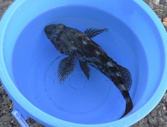 「 チヌ ( 黒鯛 ) 釣り入門 」 0113
