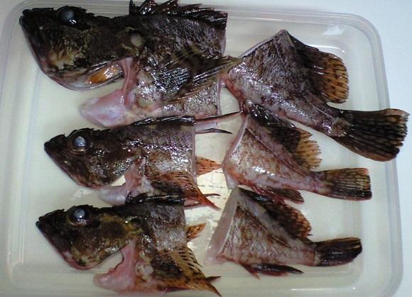 「 チヌ ( 黒鯛 ) 釣り入門 」 0120