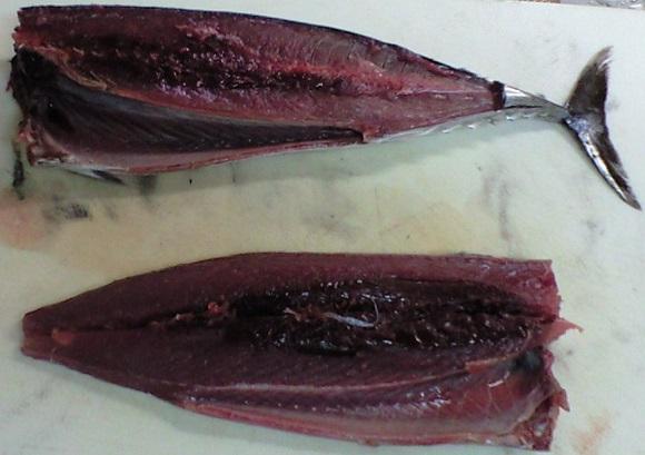 「 チヌ ( 黒鯛 ) 釣り入門 」 0137