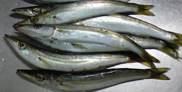 「 チヌ ( 黒鯛 ) 釣り入門 」 0154