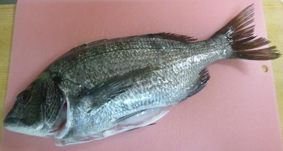 「 チヌ ( 黒鯛 ) 釣り入門 」 0204
