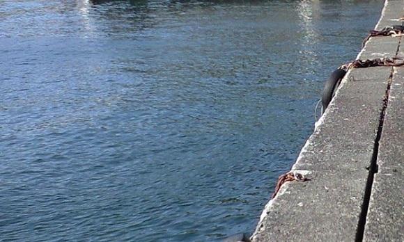 「 チヌ ( 黒鯛 ) 釣り入門 」 0256